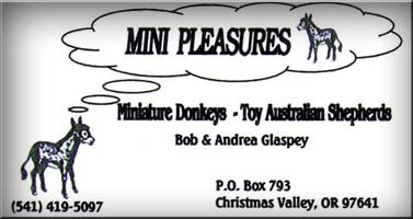 Mini Pleasures Miniature Donkeys and Toy Australain Shepherds