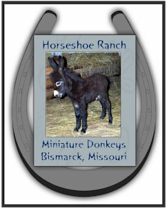 Horseshoe Ranch